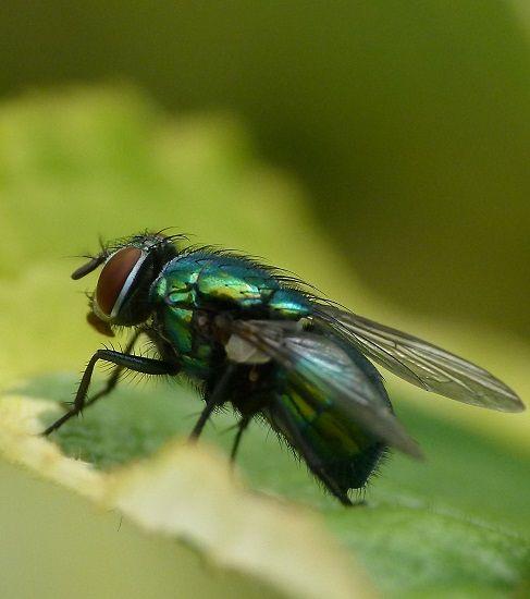 Rimedi contro le mosche: 6 metodi naturali per scacciarle