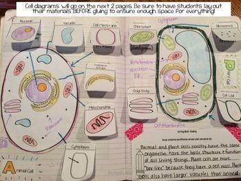25+ best ideas about Plant cell on Pinterest   Biology art ...