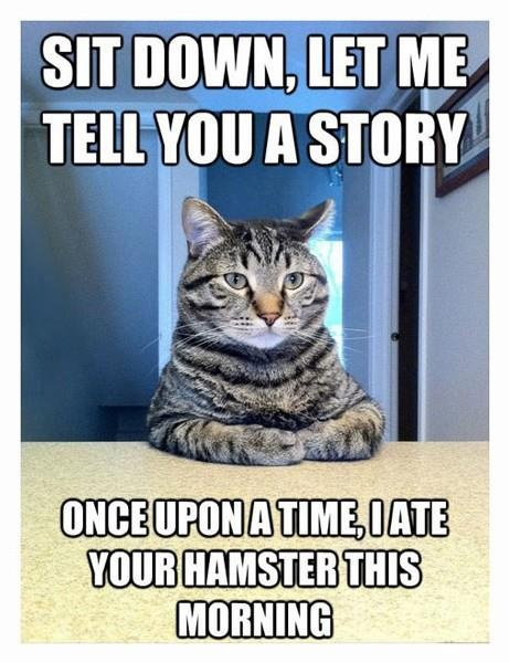must have memes (ppd) - Page 3 | Funny! | Pinterest | Funny, Funny animals and Funny cats