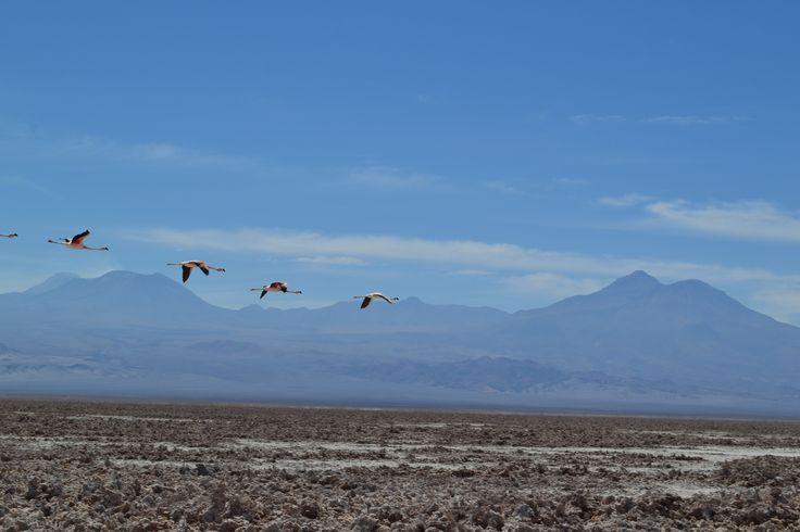 Salar de Atacama, San Pedro de Atacama, Chile, melhores dicas de viagem
