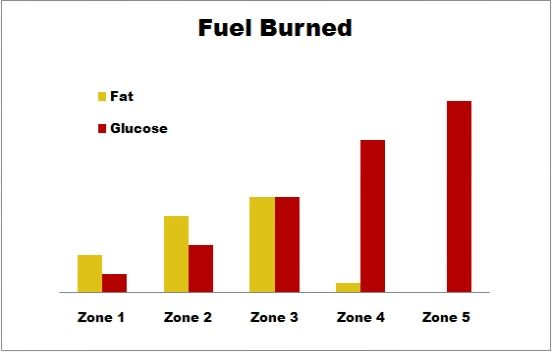 Heart rate levels and glucose levels – Fitscript