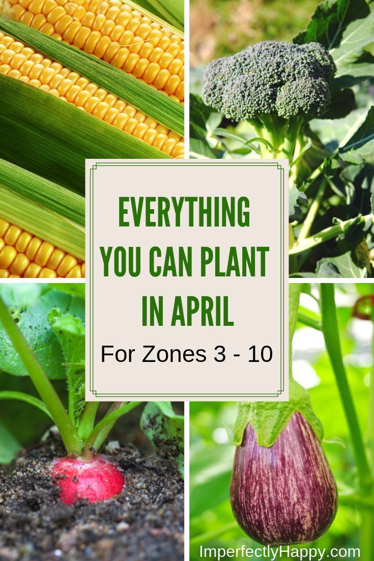 50c470b3c5f5 Everything You Can Plant in April for Zone 3 - 10 in your vegetable garden.