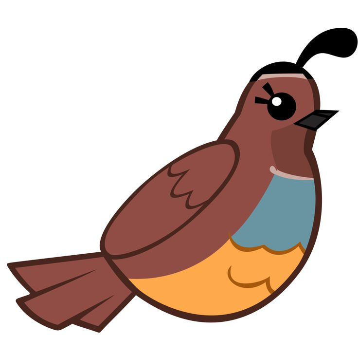 clipart of quail - photo #18