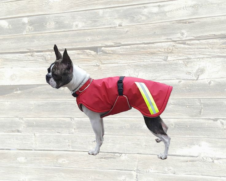 Winter Dog Coat, custom dog coat, dog coat made with tummy panel, reflective dog coat, waterproof dog coat by madebyde on Etsy https://www.etsy.com/listing/216750275/winter-dog-coat-custom-dog-coat-dog-coat