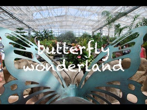 Fun for all ages at Butterfly Wonderland in Scottsdale, Arizona