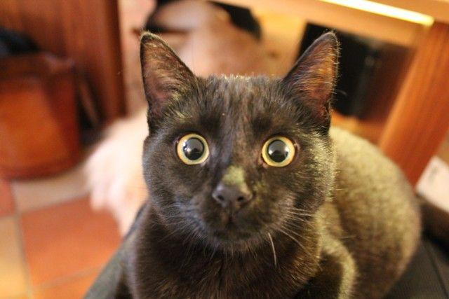 Oh nooooooooooooooooo! You mean I'm adopted???!!!!!! / Noooooooo!!!! Sono adottata??????!!!! ;)