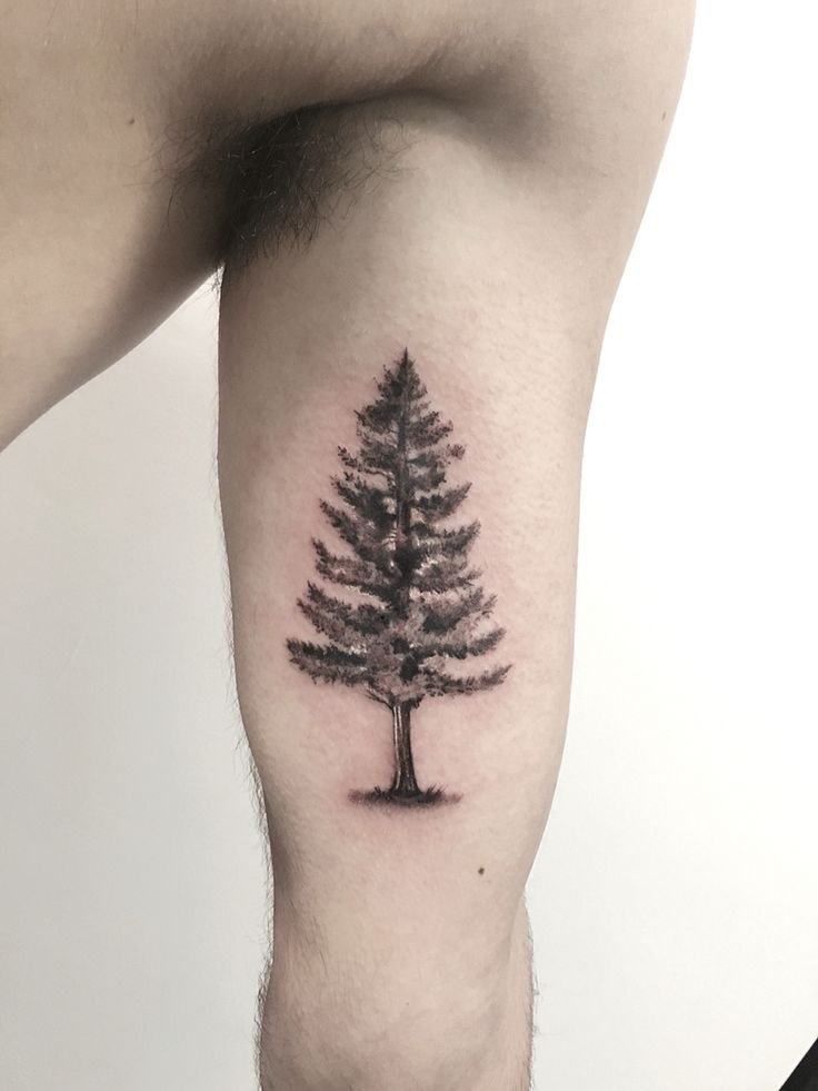 25 best ideas about evergreen tattoo on pinterest tree for Evergreen tree tattoo