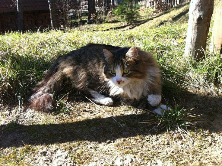 There is something in the grass - Puszek the Cat in hotel & SPA Termy Medical WARMIA PARK (Pluski near Olsztyn, Warmia and Mazuria)