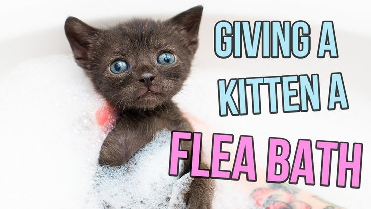 How to Give a Kitten a Flea Bath Baby kittens, Kittens