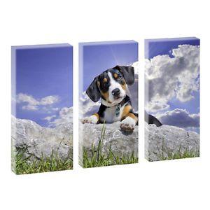 Schweizer Sennenhund- Kunstdruck auf Leinwand - dreiteilig -je 40cm*80cm