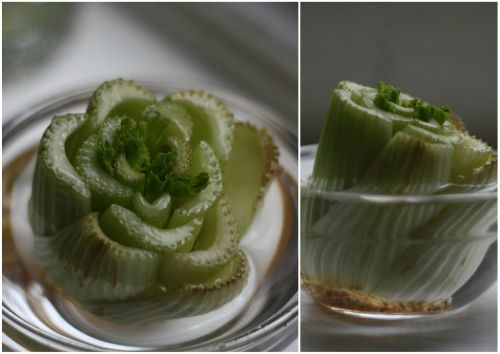 Remember when we tested and shared how to grow onions indefinitely   last week? Well, at the same time, we've been testing out another  l...