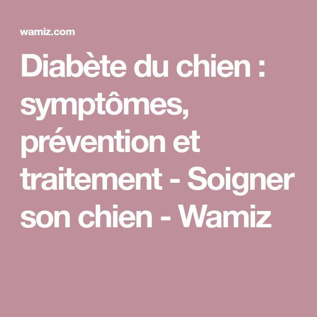 Diabète du chien : symptômes, prévention et traitement - Soigner son chien - Wamiz