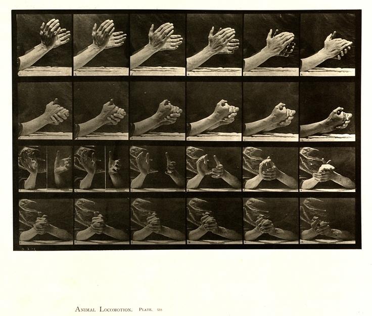 Animal Locomotion   Eadweard Muybridge