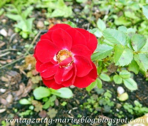 Von Tag zu Tag - Maries Blog: Mein Garten im Oktober