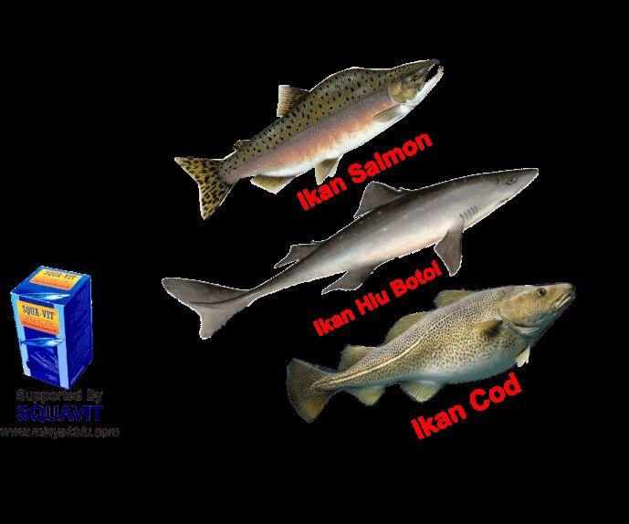 perbandingan kandungan Minyak Ikan