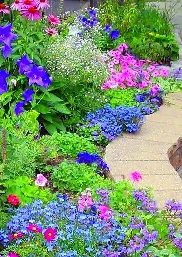 lovely colorful flower bed