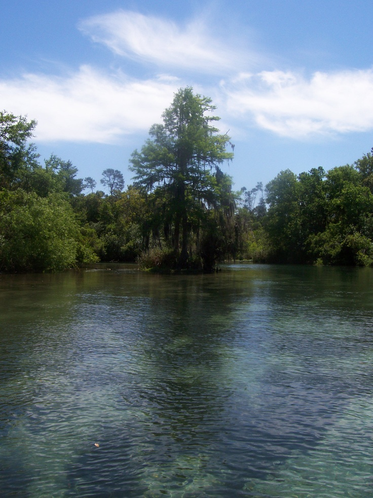 22 Best Images About My Hometown Crystal River  Florida On Pinterest