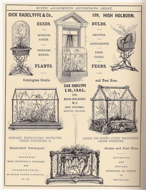 The Fern and Mossery: Fern Fever: The Story of Pteridomania - Victorian Terrarium Craze