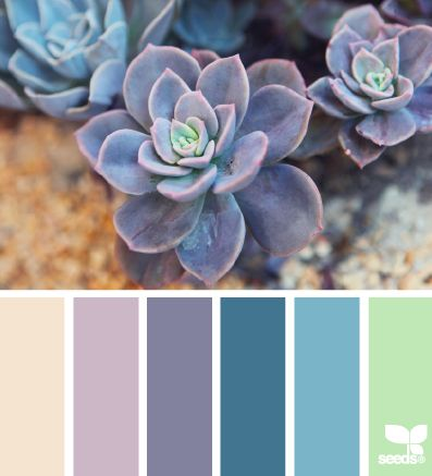 I love the mix of cool and soft tones in this palette. And, I just love succulent color palettes.