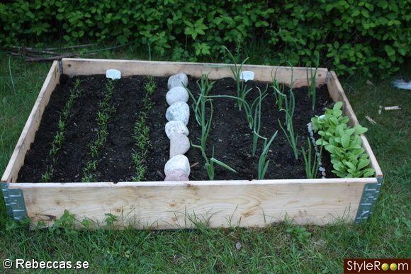 anlägga trädgårdsland med pallkragar - Sök på Google