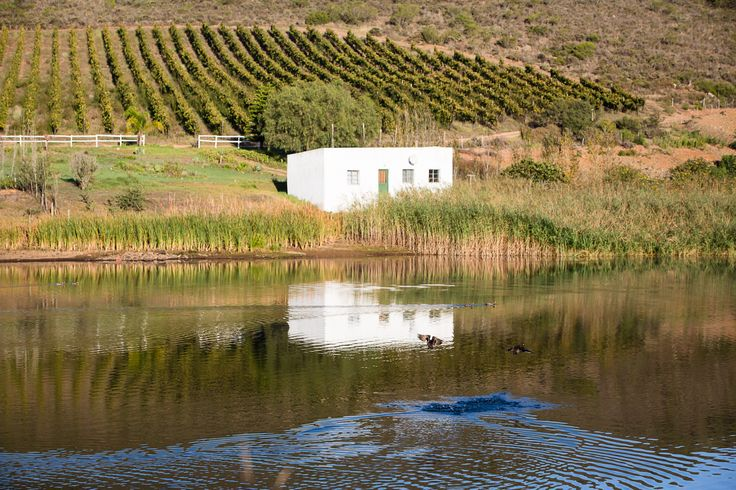 #Travelpics - take a drive through our magnificent working #farm #Swellendam