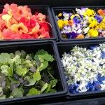 Edible flowers grown on Chef Simon Rogan's farm in Cumbria