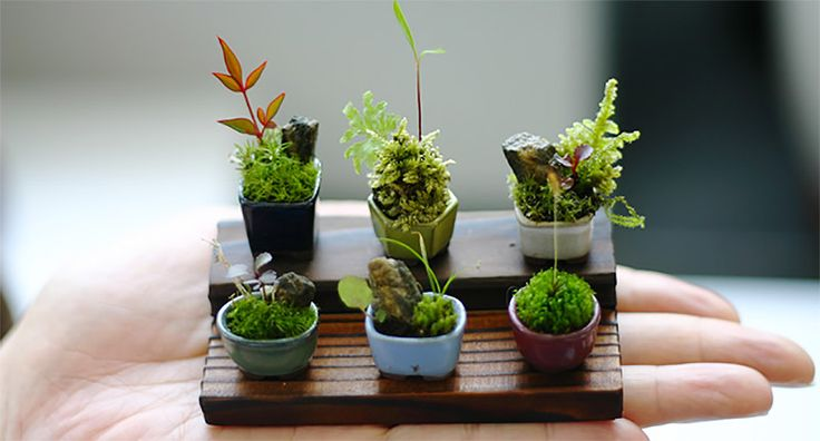 Ultra Small Bonsai Plants Give New Meaning to the Word Miniature  http://www.thisiscolossal.com/2014/05/ultra-small-bonsai-plants-give-new-meaning-to-the-word-miniature/