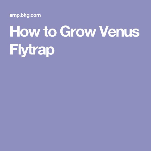 How to Grow Venus Flytrap