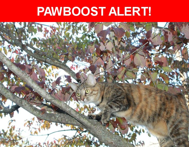 Please spread the word! Mynxii was last seen in Middletown, OH 45044.  Description: Last seen Nov. 2, 11PM.  Spayed female tabby.    Blended white spot above nose.   Patches of blended rust-colored fur.  Friendly, but runs from most adults and children.  ~7lbs.  Nearest Address: Tremont Ct, Middletown, OH, United States