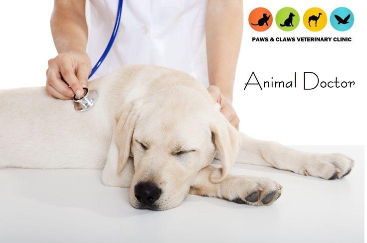 14++ Grand paws animal clinic ideas