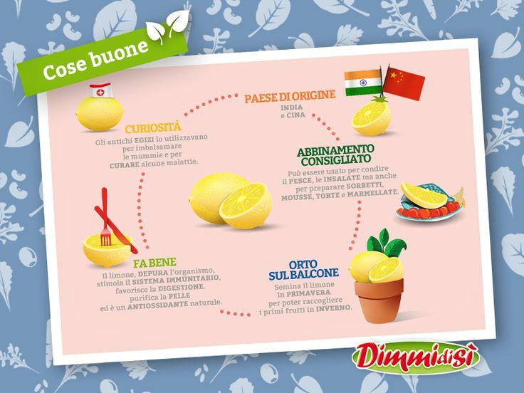 Oggi scopriamo insieme tutti i segreti del #limone. Ecco qualche #curiosità in più: http://www.dimmidisi.it/it/dimmidipiu/cose_buone/article/i_segreti_del_limone.htm - #dimmidisi #alimentazione #food #lemon #infografica #infographic