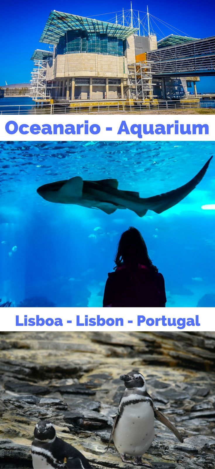 Amazing way to spend an afternoon in Lisbon is to hang out with the 4500 creatures at the aquarium . . | visiting the Lisbon Aquarium | How do i get to oceanario Lisboa | Information Lisbon Aquarium | Where is the Lisbon Aquarium |Lisbon Oriente station |