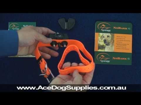 (40) Bark Collar Review - Sport Dog SBC-6 - YouTube