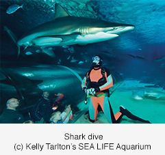 Shark Cage or Dive Experience at Kelly Tarltons Sealife Aquarium