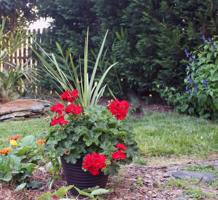 Gorgeous geranium planter spring inspirations for your porch and patio pinterest spikes - Care geraniums flourishing balcony porch ...