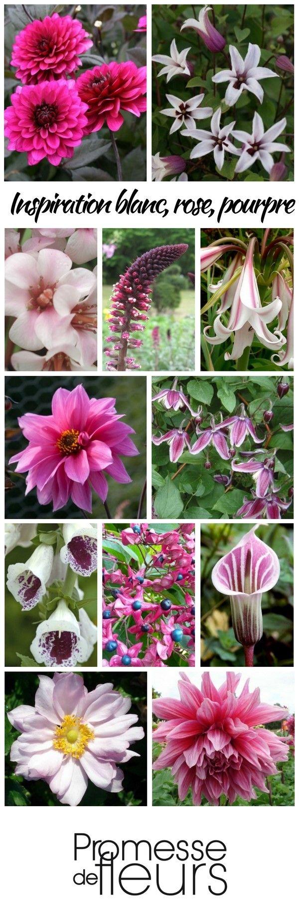 Scène de jardin blanc, rose et pourpre.
