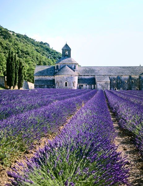"""Go to the Abbaye Notre-Dame de Sénanque in Provence in June, when the lavender is out and the monks are chanting in the garden."" - Rose Tarlow"