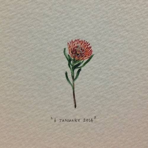 Pincushion Protea by Lorraine Loots, 365 postcards for ants. Love it!