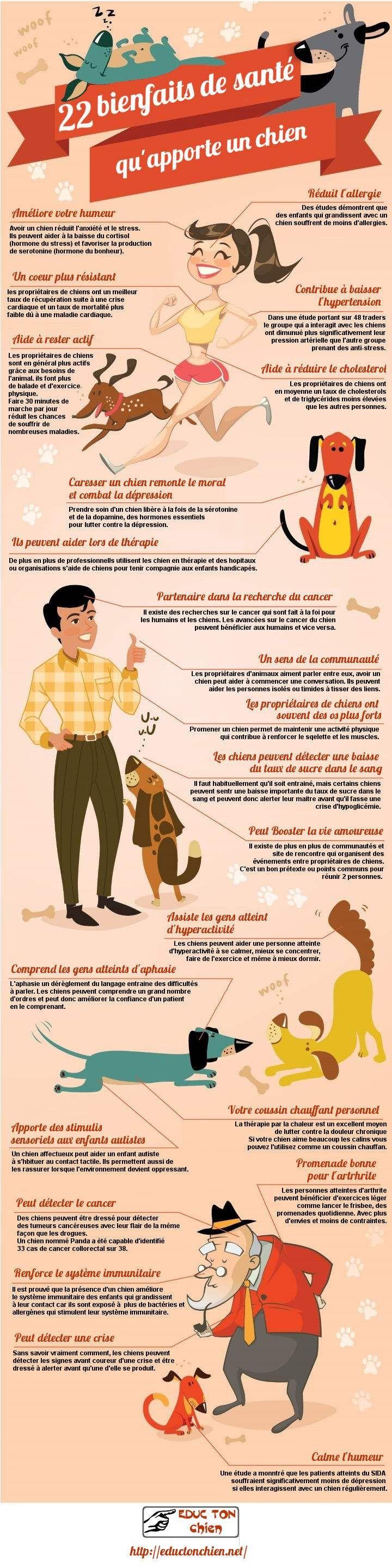 En plus d'être de très bonne compagnie la présence d'un chien au quotidien est très bénéfique pour la santé, découvrez pourquoi avec cette infographie.