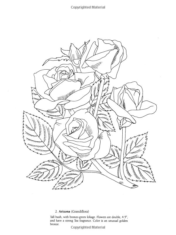 botany coloring pages - photo#30