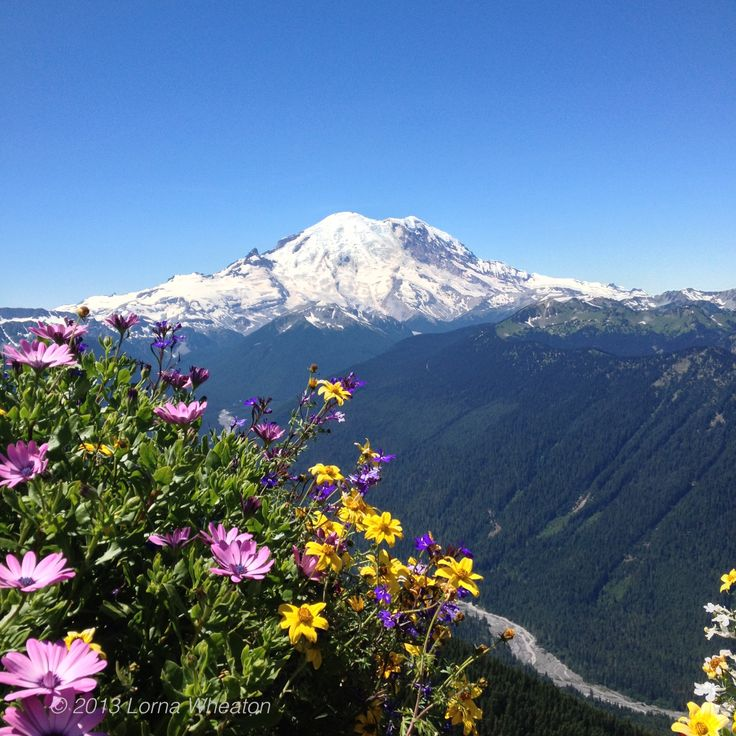 Summer at Crystal Mountain Ski Resort in Washington State. Beautiful for sight seeing and hiking. Mt. Rainier in the background.