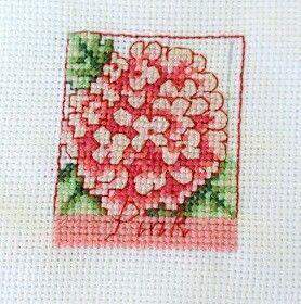 Hydrangea, flower sampler