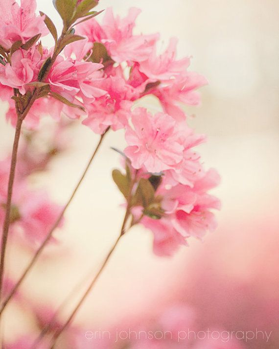 art flower photography pink home decor wall art by eireanneilis, $25.00