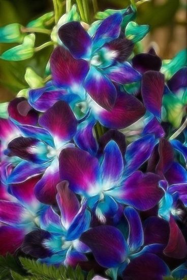 Beautiful coloured Orchids by Claire  Farley