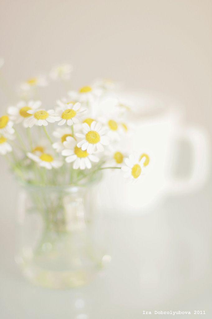 147 besten verschiedene Pflanzen und Blüten Arten Bilder auf ...