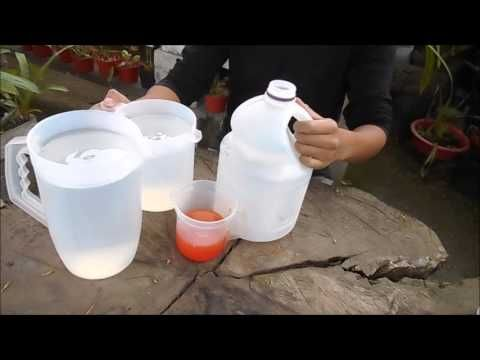 Cómo hacer un insecticida natural y casero para las orquídeas || Orquiplanet - YouTube