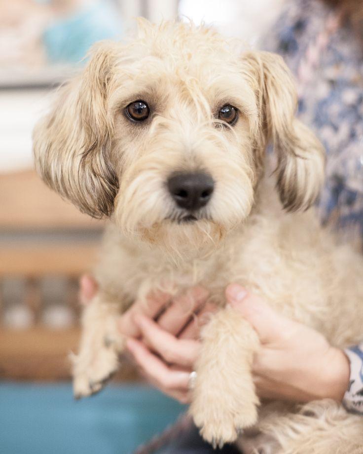 Adopt Fuzzie on Dog clinic, Dog medicine, Dog daycare