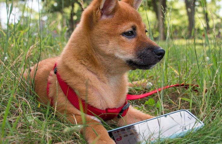 Training your dog to respect the invisible fence boundary isn't difficult. If done right, you can train your dog in 30 days!