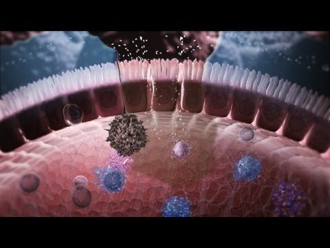 Immunology in the Gut Mucosa - he gut mucosa hosts the body's largest population of immune cells. Nature Immunology in collaboration with Arkitek Studios have produced an animation unravelling the complexities of mucosal immunology in health and disease.