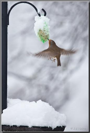 John Hobbs  photos   Album: UK - More Snow  Picasa Web Albums